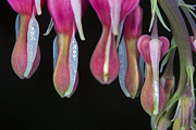 Flower Design Photos - Flowers Hanging Out by Darcy Michaelchuk