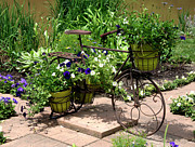 Two Wheeler Photo Prints - Flowers Home from the Market  Print by Paul Cannon