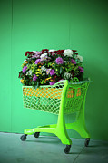 Shopping Cart Prints - Flowers In Shopping Cart Print by Stock4b-rf