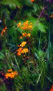 Photo Manipulation Framed Prints - Flowers in the Woods at the Haciendia Framed Print by David Lane