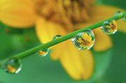 Drop Posters - Flowers In Water Droplets Poster by Thank you.