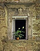 Hilltown Photos - Flowers in Window by Mark Coran