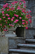 Stone Steps Posters - Flowers On The Steps Poster by Mary Machare