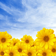 Background Photos - Flowers over Sky by Carlos Caetano