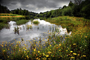 Field Flower Prints - Flowery Lake Print by Carlos Caetano