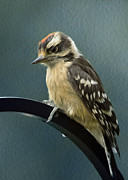 Small Bird Prints - Flowing Downy Woodpecker Print by Bill Tiepelman