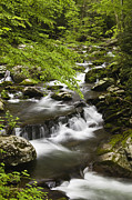 Lush Green Posters - Flowing Mountain Stream Poster by Andrew Soundarajan