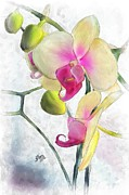 Stacy Moore Framed Prints - Flowing Orchids Framed Print by Stacy Moore