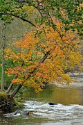 Oak Creek Photos - Flowing River Leaning Tree by Robert Harmon