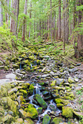 Olympic National Park Prints - Flowing Through The Woods Print by Heidi Smith