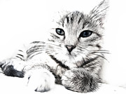 Cute Cat Digital Art Posters - Fluff Poster by Tilly Williams