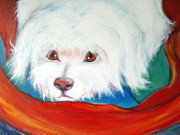 Maltese Dog Posters - Fluffy friend Poster by Jacqui Mckinnon