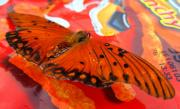 Insects Pyrography Originals - Flutterby XVI by Radical Reconstruction Fine Art Featuring Nancy Wood