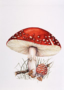 Mycology Prints - Fly Agaric Mushrooms Print by Lizzie Harper