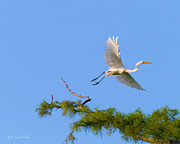 Egret Digital Art Posters - Fly Away Egret Poster by J Larry Walker