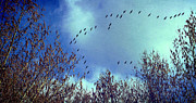 Brown Photo Metal Prints - Fly away Metal Print by Kristin Kreet