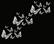 Black And White Digital Art Prints - Fly Away Print by Lourry Legarde
