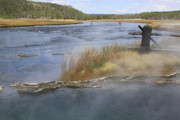 Fly Fishing And Geyser  Print by Gayle Johnson