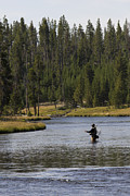 Flyfishing Posters - Fly Fishing in the Firehole River Yellowstone Poster by Dustin K Ryan