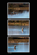 Fly Casting Posters - Fly Fishing Triptych Black Background Poster by Steve Purnell