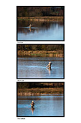 Fly Casting Posters - Fly Fishing Triptych White Background Poster by Steve Purnell