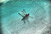 Dragon Fly Prints - Fly of Dragon Print by Greg Sharpe