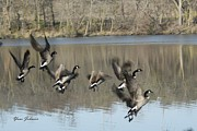 Geese Pyrography Acrylic Prints - Fly off for water Acrylic Print by Yumi Johnson