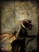 Up Close. Texture Originals - Fly on the Wall by Charles Bodi