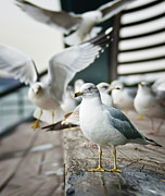 Medium Group Of Animals Posters - Fly Seagulls Poster by 48323053@n03