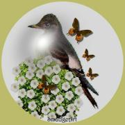 Aves Digital Art - Flycatcher by Madeline  Allen - SmudgeArt