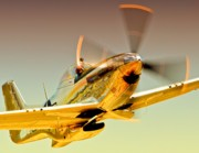 Motorsports Originals - Flyin Golden Boeing North American P-51D Mustang and Brant Seghetti   by Gus McCrea