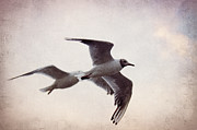 Flying Gull Posters - Flying Poster by Angela Doelling AD DESIGN Photo and PhotoArt