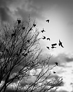 Cloudy Photo Prints - Flying birds Print by Elena Elisseeva