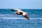 Malibu Lagoon Framed Prints - Flying By Framed Print by Alexander Martinez