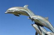 Vicky Mowrer - Flying dolphins