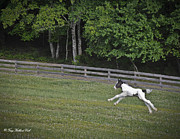 Gypsy Cob Framed Prints - Flying Like the Wind Framed Print by Terry Kirkland Cook
