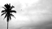 Flying-off From Palm Tree Print by Rosvin Des Bouillons