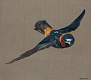 New Orleans Oil Paintings - Flying Solo  cliff swallow by Jason DuMouchel