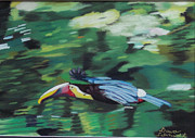 Animals Pastels Originals - Flying Toucan in Costa Rica by Dana Schmidt