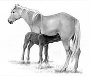 Bonding Drawings Metal Prints - Foal And Mare In Pencil Metal Print by Joyce Geleynse