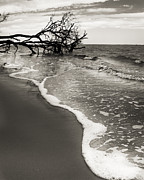 Fripp Prints - Foam Print by Barbara Marie Kraus