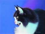 Cats Pastels Prints - Focus Print by Tracy L Teeter