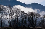 Oregon Prints - Fog and Trees in the Rogue Valley Print by Mick Anderson