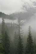Winter Scenes Photos - Fog Hangs In A Valley Of Evergreens by Raymond Gehman