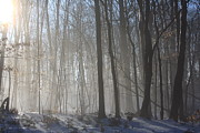 Trees - Fog In January by Lynn-Marie Gildersleeve