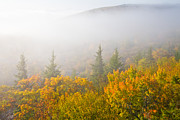 Bear Rocks Posters - Fog on Dolly Sods Poster by Bill Swindaman