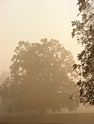 Haze Photo Prints - Fog over Countryside Print by Olivier Le Queinec