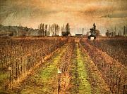 Vineyard Photos - Foggy Afternoon on Highway 97 by Tara Turner