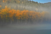 Clark Fork - Id - Foggy Autumn Morning by Albert Seger