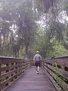 Polk County Florida Photos - Foggy Bottom Trail Walker by Christopher  Mercer